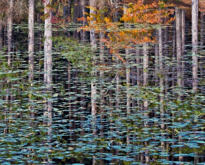 Reflective Fall Grove