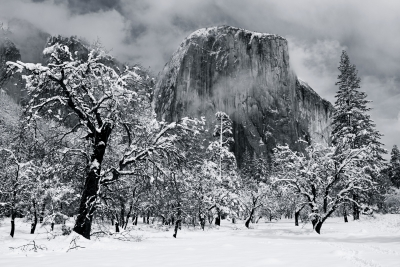 El Capitan And Yosemite's Black Oaks Study