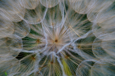 Seed Head Close Up