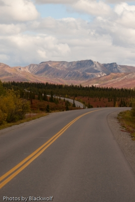 The Road To Wildneress