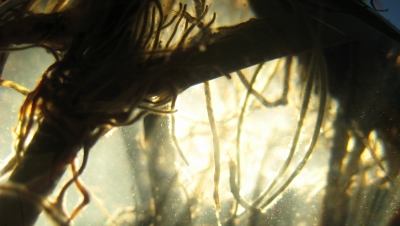 Sunlight Through Plant Roots2