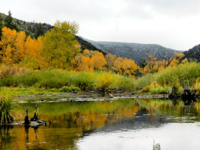 Fall Colors In Cimaron Canyon