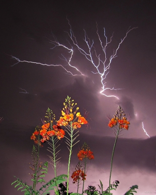 Fire And Lightning