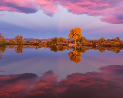 Spots Of Gold Among The Pink Clouds