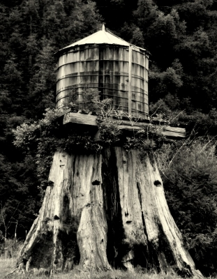 Old Growth Water Tower