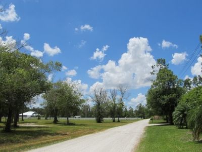 Rural Road In Florida2