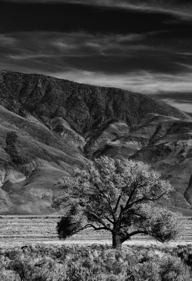 Autumn In The Owens Valley