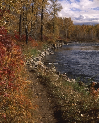 Autumn Along The Gallatin River