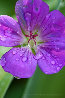 Flower With Dew