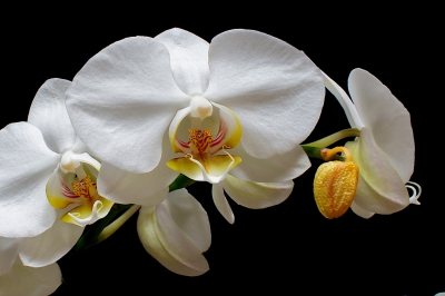 Orchids, Archetypes And Dud