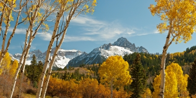 Mount Sneffels Through The Aspens