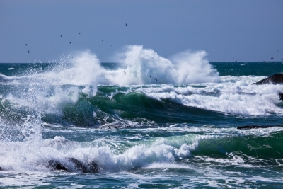 In-coming Tide And Sea Birds
