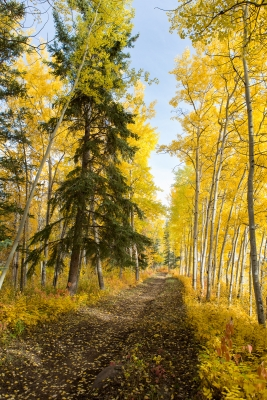 Hay River Nature Trail