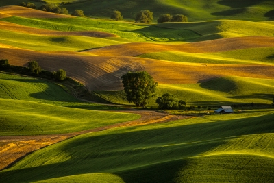 Hills Of Palouse