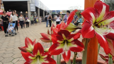 Star Flowers Among Crowds