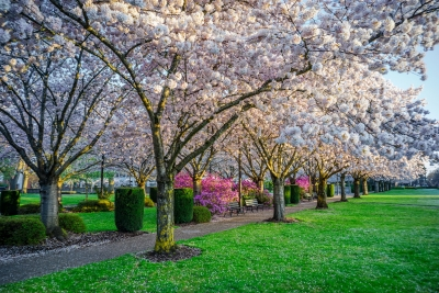 Oregon Capitol Grounds At Sunrise