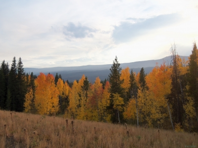 Fall In The Big Horn Mt's