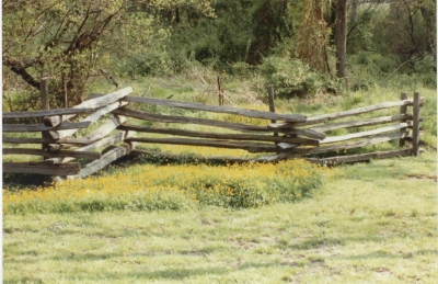 Fence And Wildflowers