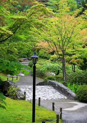 Beauty At The Japanese Garden