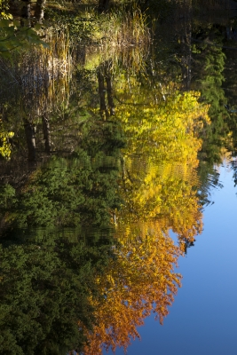 Acadia Fall Reflections