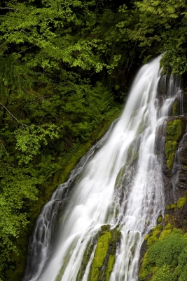 Panther Creek Waterfall, Wind River Valley, Gifford Pinchot National Forest, Washington