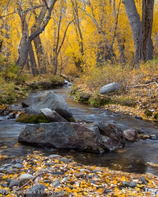 Autumn Glow, Mcgee Canyon (eastern Sierra)