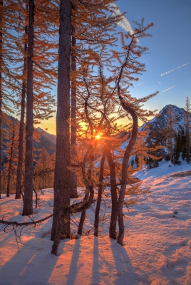 Golden Larches Of Lake Ingalls