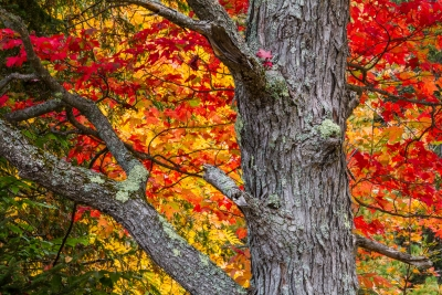 Vermont Fall Colors #3
