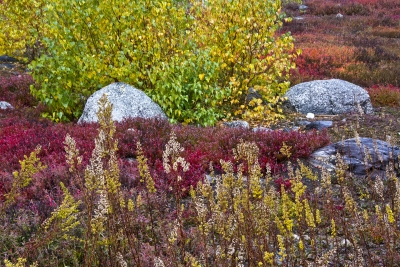 Color At The Blueberry Barrens