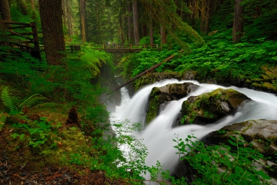 Early Morning At Sol Duc Falls
