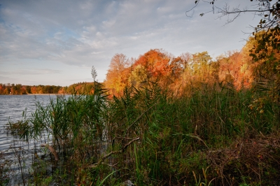 Fall, Reservoir, Reeds, Trees, Water, Sky, Clouds, Hdr