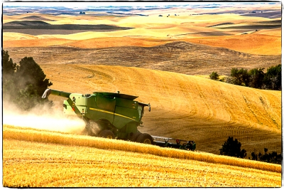 Summer Harvest In The Palouse