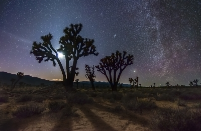 Joshua Trees Under Moonlight And The Milky Way