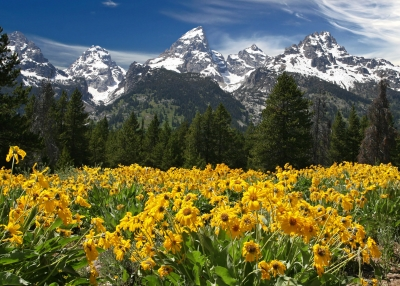 Teton Flower Fields