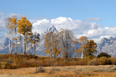 Teton Mountain View