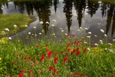 Wildflowers By The Lake
