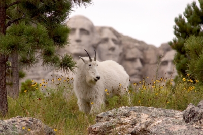 Five Faces Of Mount Rushmore