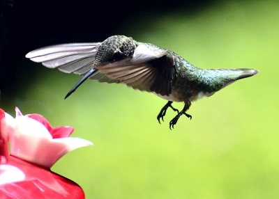 Cleared For Landing