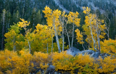 Mount Rose Aspens