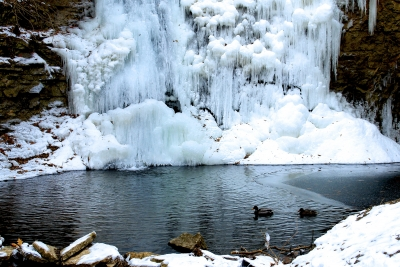 Frozen Hayden Falls And Ducks On The Pond