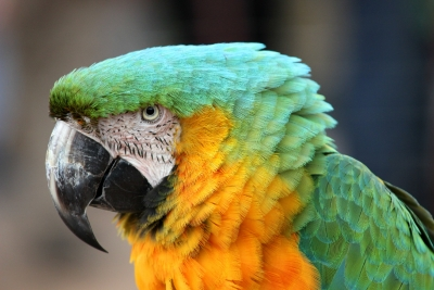 """""""parrot's Perspective"""""""
