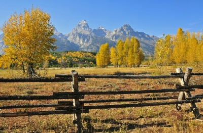 Tetons Behind The Fence