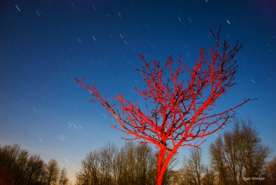 Red Tree Star Trails