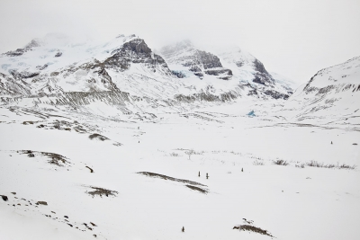 Columbia Icefield In Winter