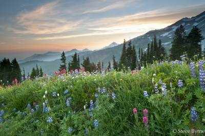 Alpine Meadow At Paradise