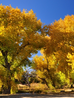 Fall Colors In Valyermo, Ca