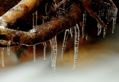 Icy Roots