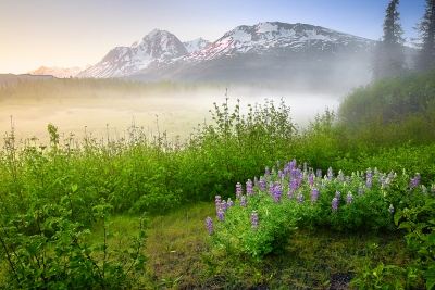 Alaska, Chugach National Forest, Seward Highway, Sunrise, Fog, Wildflowers, Landscape