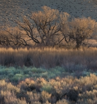 Owens Valley Morning Light.