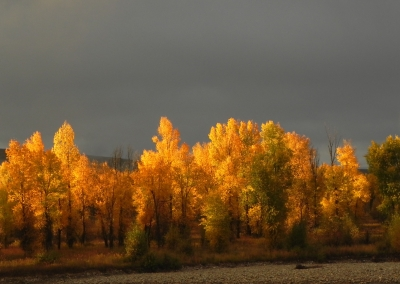 Autumn On The Gros Ventre